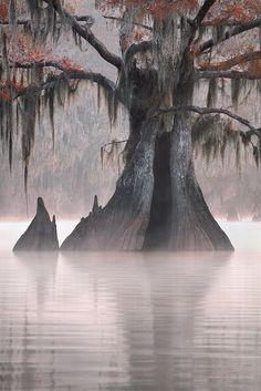 Jude Haase | Louisiana Landscape