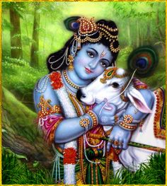 """☀ SHRI KRISHNA ☀http://careforcows.org/""""Lord Krishna is steady, His senses are controlled, and He is forgiving, grave and calm. He is also equal to all. Moreover, He is magnanimous, religious, chivalrous and kind. He is always respectful to respectable people.""""~Chaitanya Charitamrta Madhya 23.73"""