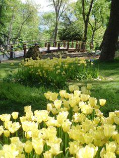 Tulips in Istanbul-Yıldız park