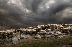Flock in the Alps by Daniel Metz on 500px