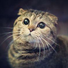 SI, si !  j'ai des oreilles, mais elles sont  très petites, donc très discrètes, mais  j'entends très bien.....