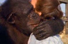 20 yıl sonra bakıcılarını gören şempanzelerin mutluluğu - Doruk Televizyon ve Radyo Yayıncılık A.Ş.
