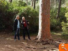Julià Álvaro defiende la reforestación con flora autóctona para dar valor a nuestros bosques y riberas :: elperiodic.com