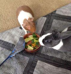 megosztás vacsora