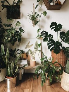 Amazing Indoor Jungle Ideas To Home Decor The most beautiful plants decoratio. - Amazing Indoor Jungle Ideas To Home Decor The most beautiful plants decoration ideas Green is T - Bedroom Plants, Bedroom Decor, Bedroom Furniture, Indoor Garden, Indoor Plants, Indoor Outdoor, Faux Plants, Herb Garden, Garden Beds