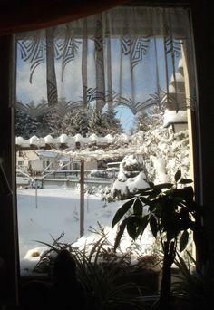 Ein Blick aus meinem Büro auf den verschneiten Garten - da macht das Arbeiten Spaß!