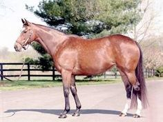Mariah's Storm(1991)Rahy- Immense By Roberto. 3x4 To Hail To Reason, 4x5x5 To Nasrullah. 16 Starts 10 Wins 2 Seconds 1 Third. $724,894. Dam Of Full Siblings Giant's Causeway, Freud, & You'resothrilling(Dam Of Gleneagles & Marvellous). One Of A Couple Fillies To Ever Beat Serena's Song.