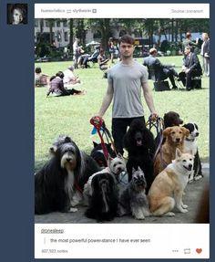 A lot of pups for Daniel