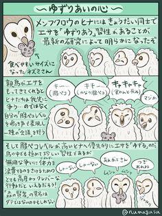 ふしぎ生き物シリーズ、メンフクロウの図解です。ブログにあげるの忘れてました、すみません。ところで生き物シリーズについて重要なお知らせがあるんですが、告知のタイミングを計りかねてます。まあいっか、もうちょっと先でも…。 Kemono Friends, Animal Paintings, Mammals, Animals And Pets, Dog Cat, Birds, Japanese, Cartoon, Drawings