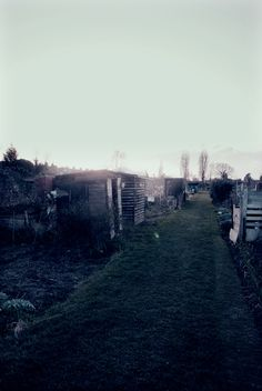 Allotment sheds