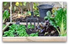 Vegetable Garden Irrigation: How Much and How Often?