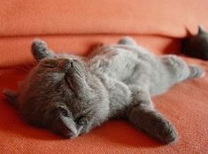Relaxation, it's an art.                 Sleeping Kitten :)