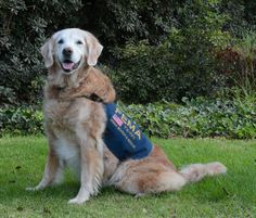 Last Known Living 9/11 Search & Rescue Dog Honored With Dream Day