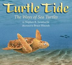 Turtle Tide The Ways of Sea Turtles by Stephen R. Swinburne. This book is an informational book on sea turtles! It is so neat and tells of how a turtle lays her eggs and of their journey to the see! It is so mind-blowing to know that only one out of a hundred sea turtles make the incredible journey to the sea!