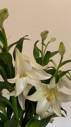 Plant Aesthetic, Flower Aesthetic, White Aesthetic, Aesthetic Iphone Wallpaper, Aesthetic Wallpapers, Pretty Flowers, Green Flowers, Aesthetic Pictures, Flower Arrangements