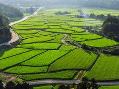 平安時代から宇佐神宮の荘園として発展し、その田園風景を色濃く残す美しい景観が評価され、2010年に国の重要文化的景観に選定されました。