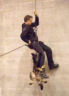 「もうちょっとだ!頑張れよ!」 訓練中、警官の足にしがみつく未来の警察犬(笑) – grape [グレープ] – 心に響く動画メディア
