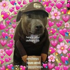 Dogs are charming animals. Dogs are not animal but they can be our pet and indeed our best friend. Their Delighting and funny reaction make them more adorable. We can also use their funny reaction in memes. Lets take a look at top 28 dog meme reaction. Love You Meme, Cute Love Memes, New Memes, Dankest Memes, Meme Meme, Memes Amor, Memes Lindos, Heart Meme, Crush Memes