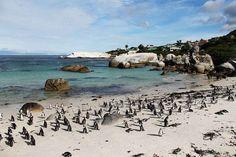 O que fazer em Cape Town. Os pontos turísticos, restaurantes, onde se hospedar, que vinícolas visitar, dicas de guia e roteiro completo de 4 dias. Como ir e curiosidades.