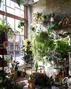 For example you could fill your flat with succulents, ivy, cacti and flowers. It'll look like a jungle and thrive in this weather, then bloom just in time for summer.