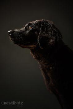 Studiofotgrafie Hund Arwen