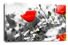 CANVAS ART POPPY PRINT FLORAL FLOWERS PRINT CHEAP WALL ART PICTURE BOX FRAMED