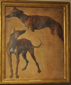 Study of Greyhounds,François Desportes , C. 1700,Musee De La Chasse