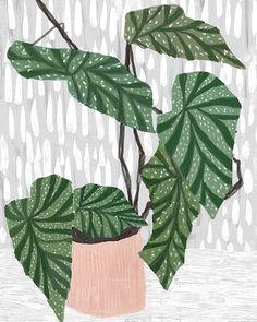 illustration | plant pattern on pattern - Ophelia Pang