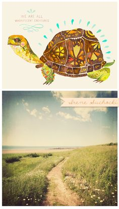 murtle the turtle