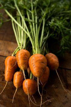 Oxheart Carrot (90 days)