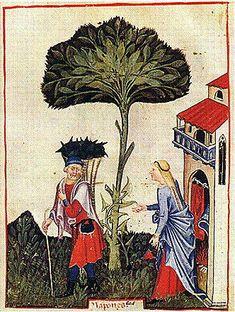 Turnips: The Tacuinum of Paris - late 14th century