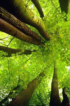 """""""Trees are poems the earth writes upon the sky, We fell them down and turn them into paper,  That we may record our emptiness.""""~ Kahlil Gibran"""