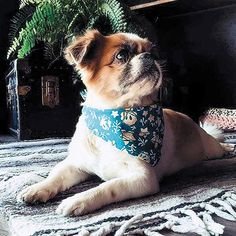 After the Black Friday craziness, pet owners can support six local businesses in the Honolulu area. Read more about Small Business Saturday
