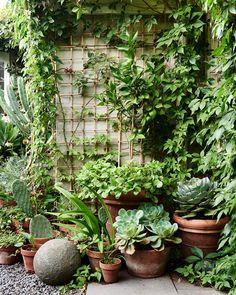 Magical Garden Vibes.