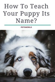 One of the most important things after getting a new puppy is to teach him his name! #petsworld #dogs #dogsofinstagram #dog #dogtraining #dogmom #cute #cutepuppies #puppy #puppies