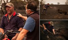 Steve Shipton from Coolagolite on the far south coast of New South Wales was consoled by neighbouring farmers after he put down calves which were burned when fires swept through his property. Australian People, How To Raise Money, Cows, Burns, In This Moment, Couple Photos, Grief, Daily Mail, Climate Action