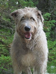The 'splorin' Wolfies - Wolfhound blog. :)