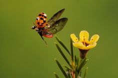 Wildlife High Speed Photography Frozen in Time High Speed Photography, Insect Photography, Types Of Photography, Stunning Photography, Wildlife Photography, Dragonfly Insect, Beast Creature, The Daily Beast, Frozen In Time