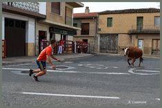De Todo un Poco: Vacas Hermanos Ganuza Street View, Cows, Siblings, Fiestas