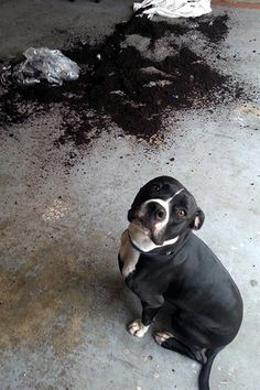 """11 Dogs Who Have No Idea Where This Mess Came From #refinery29  http://www.refinery29.com/the-dodo/70#slide1  """"I swear, it just exploded..."""""""