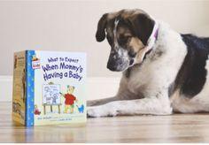 13 Creative Pregnancy Announcements With Your Pets via Brit + Co