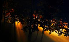 Forest light; amazing ... by Roman Gutikov  with <3 from JDzigner www.jdzigner.com