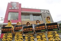 "Activists dressed as tigers did a flash mob in front of a KFC outlet in central Quezon City to call out the fastfood company on its secret recipe: ""forest destruction."" Greenpeace, is calling on KFC and its parent company Yum! Brands to stop sourcing their packaging from Asia Pulp and Paper (APP), one of Indonesia's most notoruois forest destroyers. A KFC parody website, www.KFC-secretrecipe.com asks people to help save the forests & endangered Sumatran tigers."