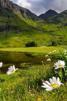 Wild flowers at Glencoe, Scotland  Photo by Natascha Hoiting