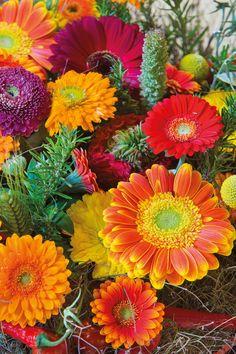 Close-up of a small colourful gerberas bouquet #orangegerberas #redgerberas #inspiration #colouredbygerbera #dutchgerbera