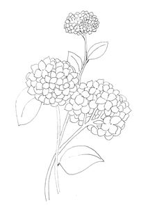Dropbox - Hydrangea Coloring Page.png