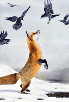 """Fox Standing with Ravens"" original watercolor by Turi MacCombie available at the R. Michelson Galleries, Northampton MA"
