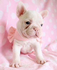 Cute Frenchie;)    Ana Rosa