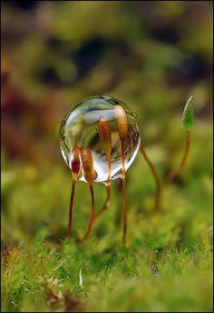 Tiny Worlds - Sprouts in Dew Drop - Андрей Осокин