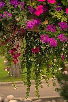 Raining Flowers | Flickr - Photo Sharing!